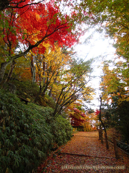 Takayama, colorful leaves
